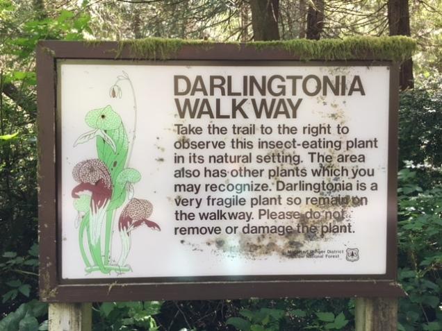 Darlingtonia Walkway
