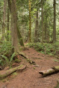 Photo of hiking trail at Millersylvania State Park