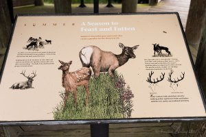 A photo of an interpretive sign teaching about elk in the summer