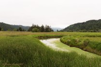 A photo of the grasslands of the Dean Creek elk viewing area