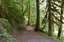 Photo of the lush green Butte Creek Falls trail taken in July