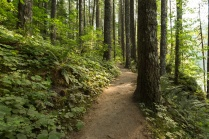 Photo of Lower Falls Trail in Gifford Pinchot National Forest