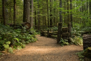 Photo of the Lewis River Lower Falls Trail
