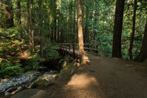Photo of a bridge on the trail