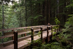 Photo of a bridge on the Lewis River Middle Falls trail