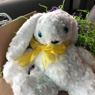 Pauline's Photography Photo of Easter bunny in Iowa