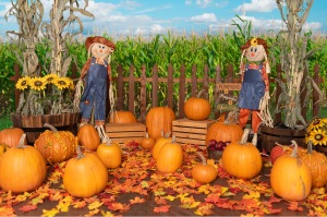 Pauline's Photography fall backdrop